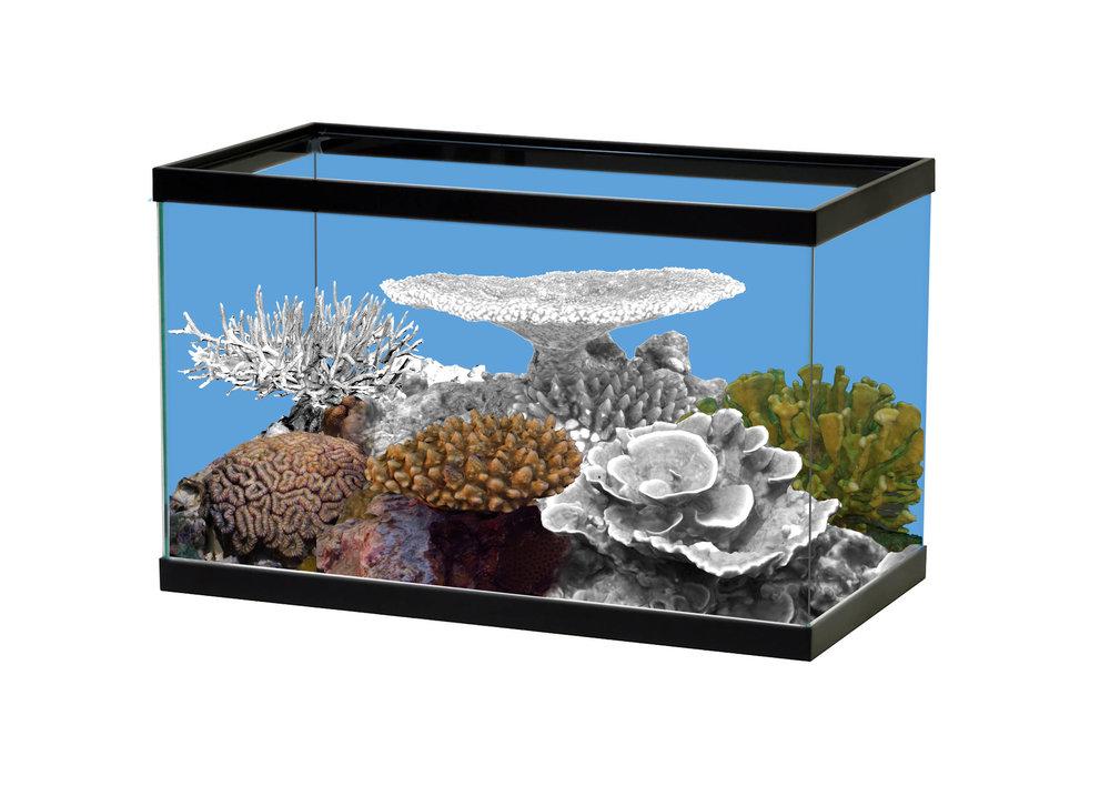 Half Bleached Coral Tank2.jpg