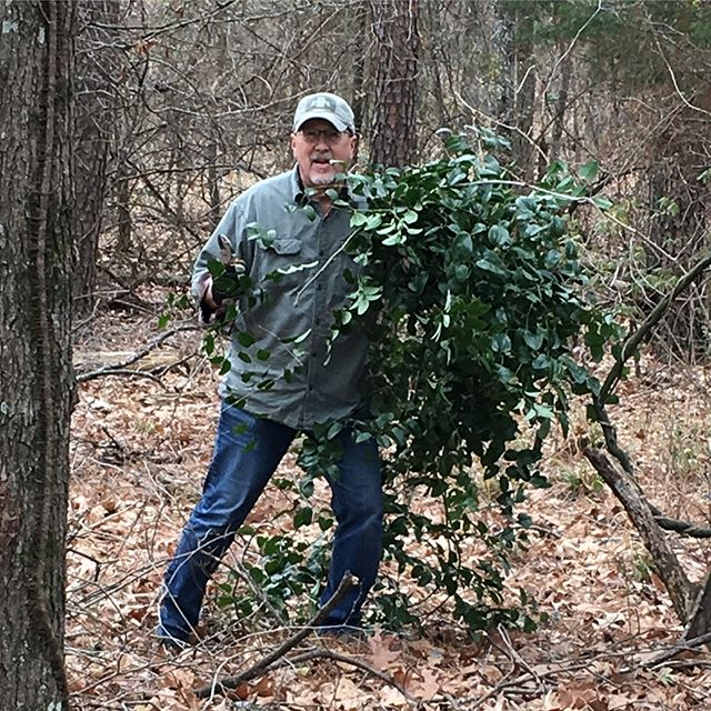 This is what retired husbands do... well mine anyway!  Pulling smilax from East Texas trees! #easttexassmilax #besthusbandever #mckinneyweddingflorist #foragingtexaswoods