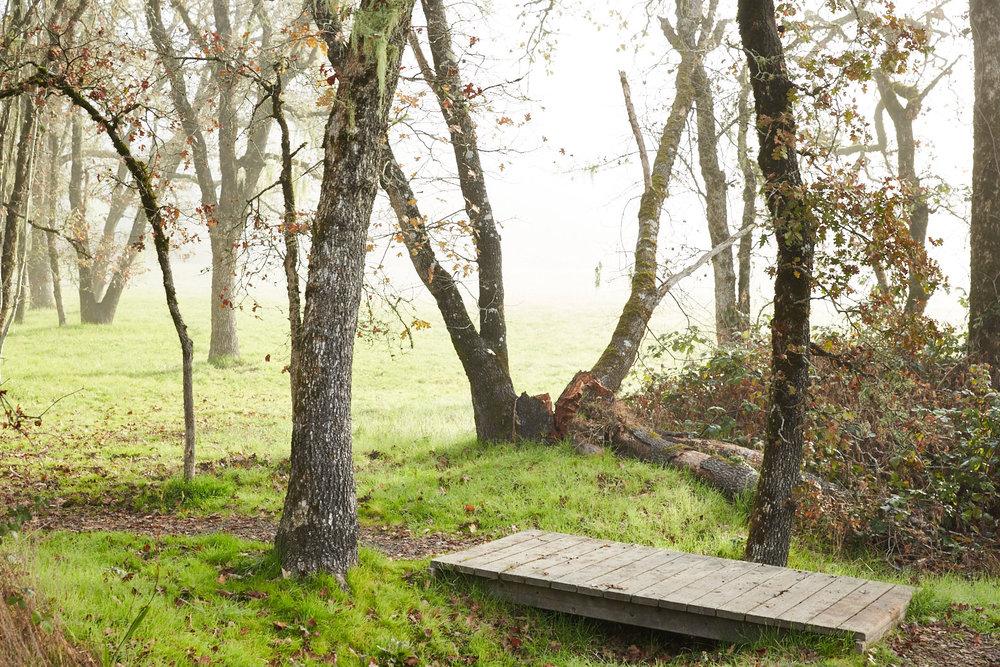 Trail Near Cottage