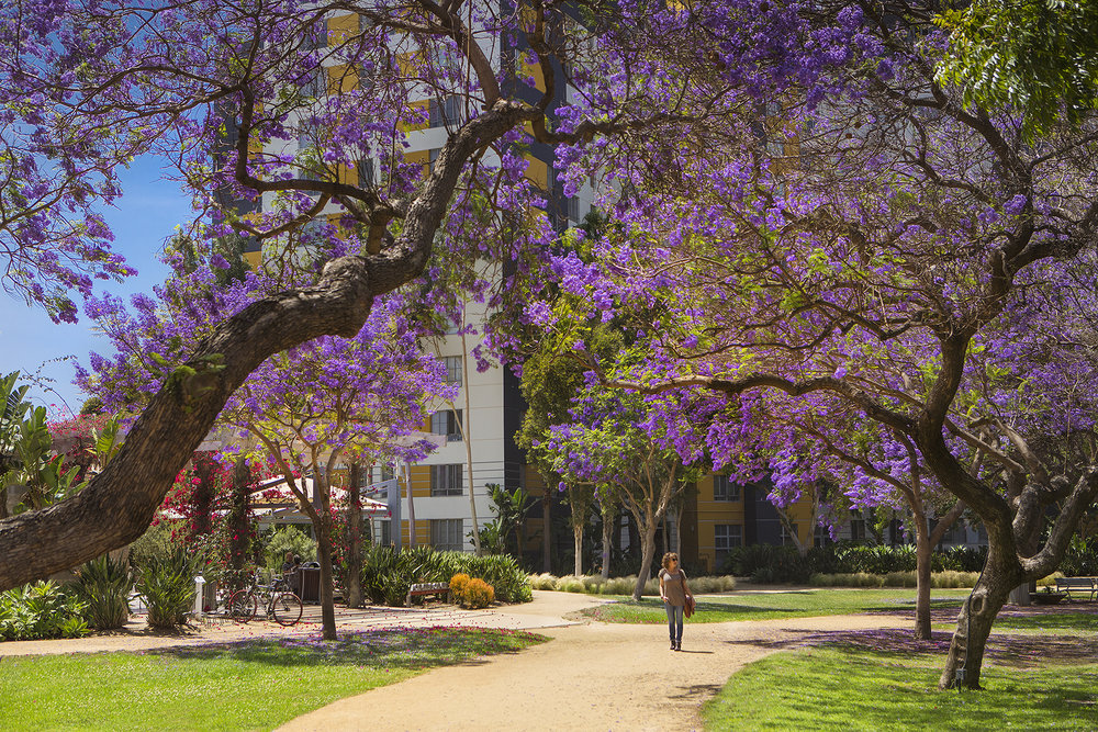 1627-02-Jacaranda-Trees_Park-LaBrea_EricFiggePhotos.jpg