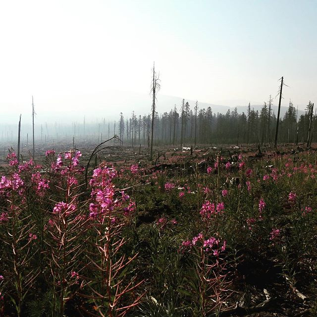 A few days before Cascade Locks...smoke from forest fires roam. #flowers #oregon #pct #pacificcresttrail