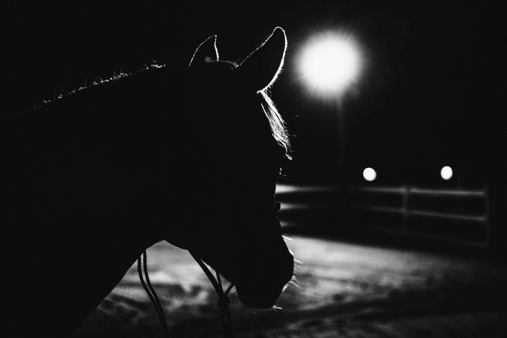 Horse-83.jpg