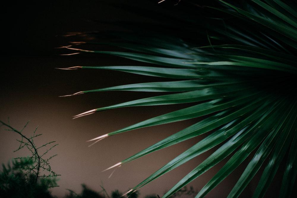 FLORIDA-BLOG--85.jpg