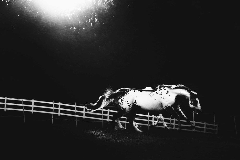 Horse-32.jpg