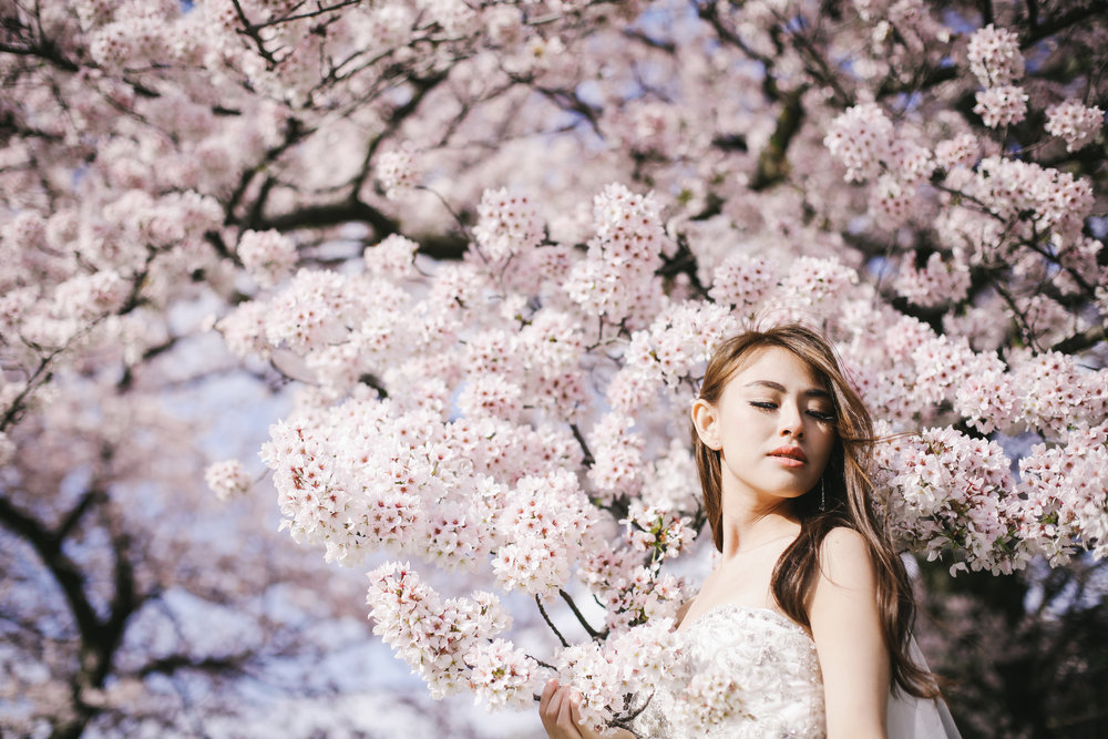 Beautiful girl under cherry blossom in Japan