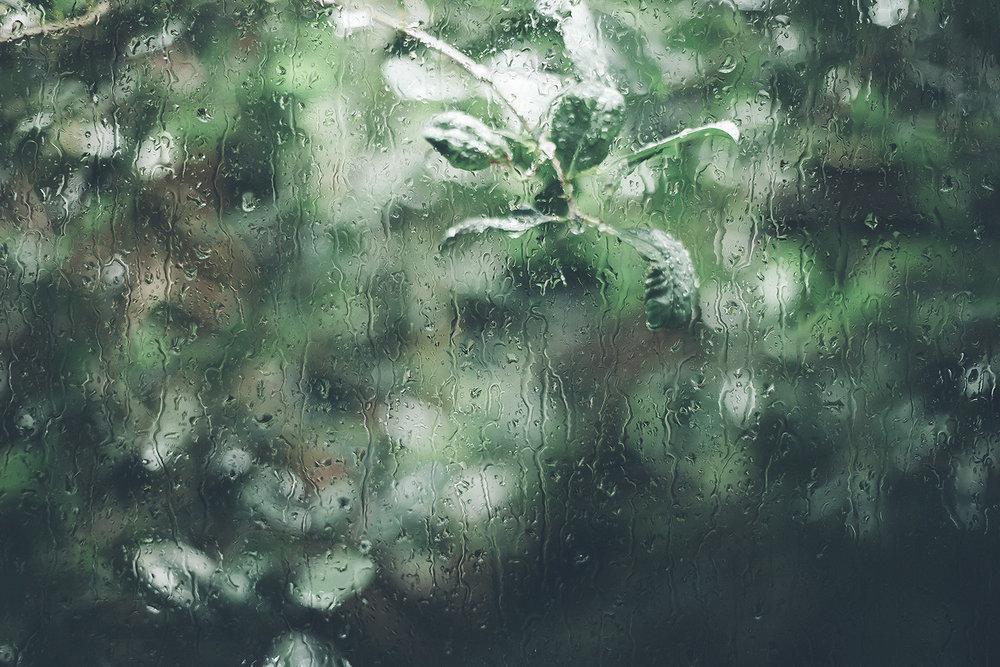 Chantelle_Grady_Nature.jpg