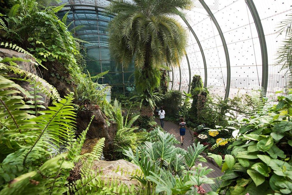 O Butterfly Garden (jardim das borboletas) é o primeiro do tipo em aeroportos. Uma profusão de flores e verde: todas verdadeiras? Em seu perfil do  instagram , Changi revelou que 97% das plantas ali são naturais