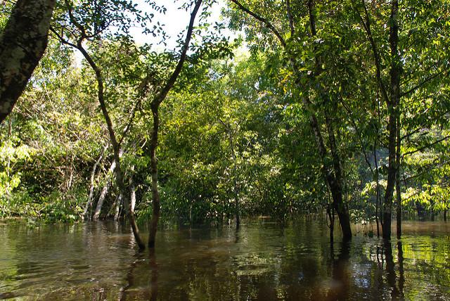 Trecho inundado da floresta amazônica (Foto: www.bbmexplorer.com )