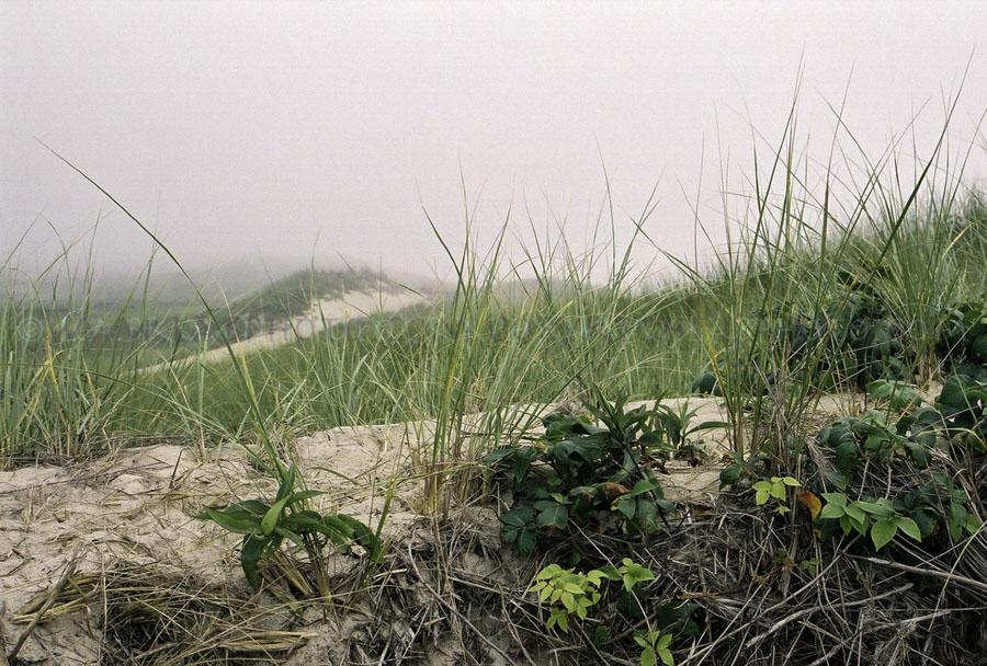 LABPHOTO Island Life-59.jpg