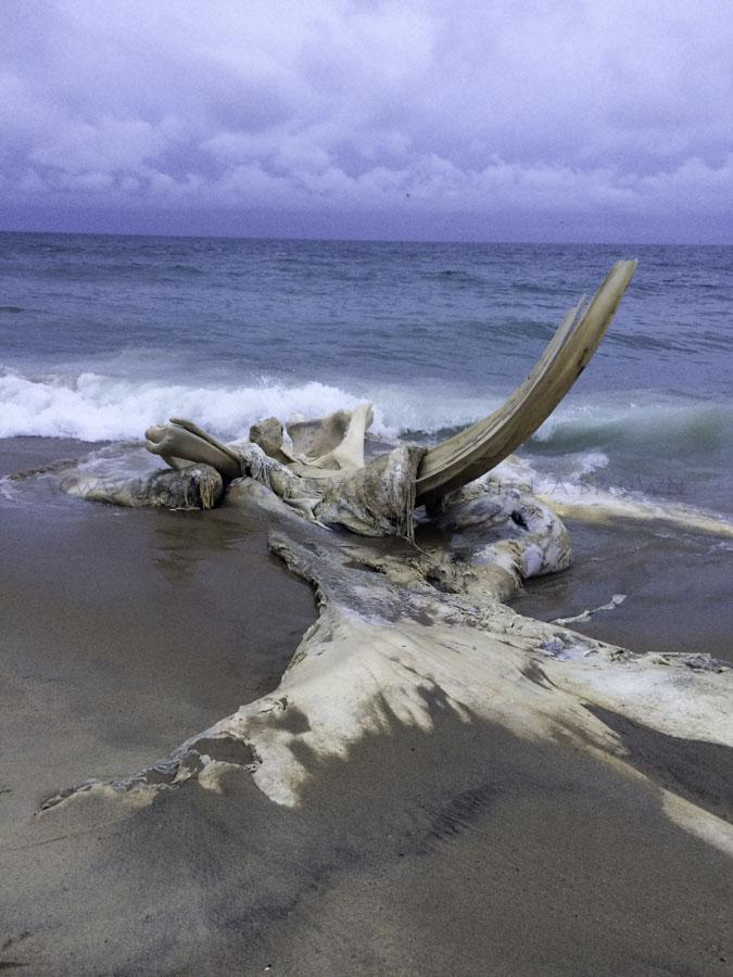 LABPHOTO Island Life-97.jpg