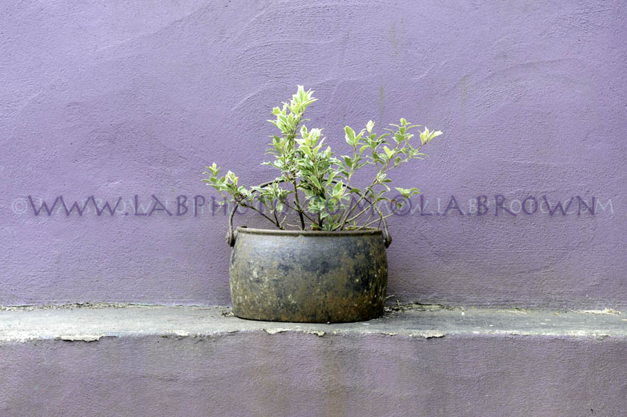 LABPHOTO Still Life-62.jpg