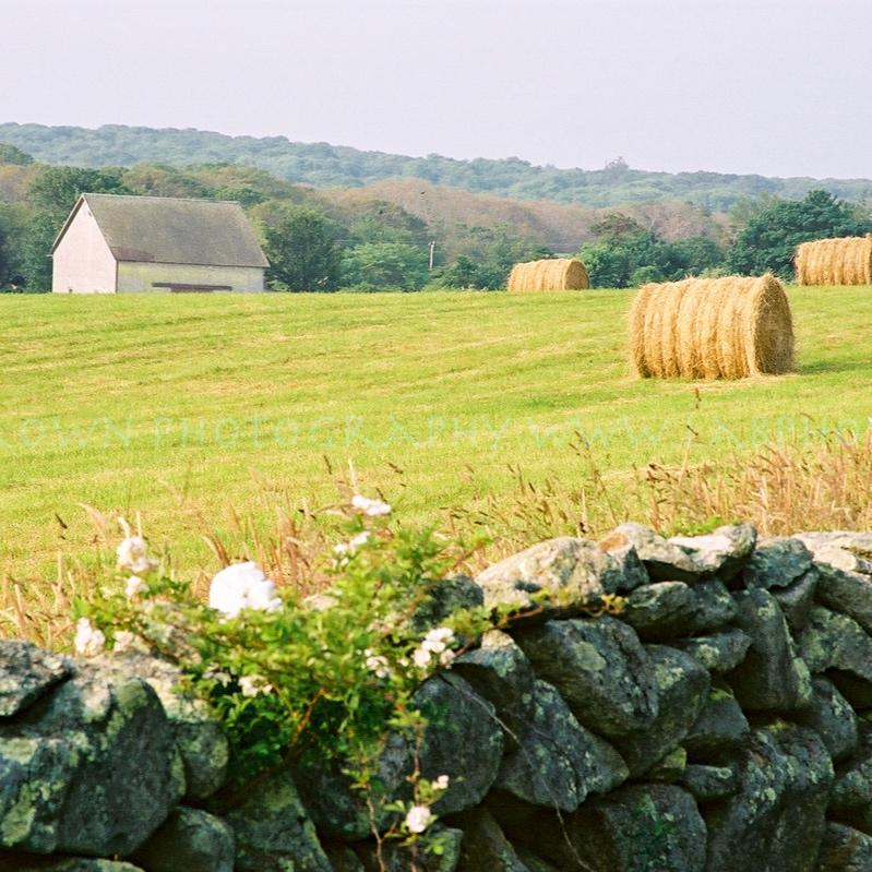 Farm-126.jpg