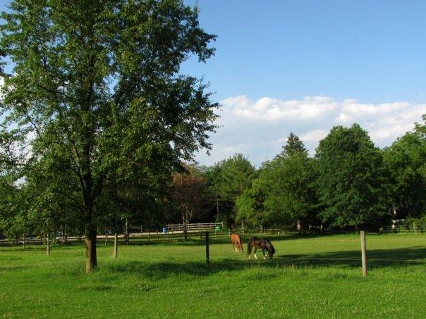 The ol' Pasture