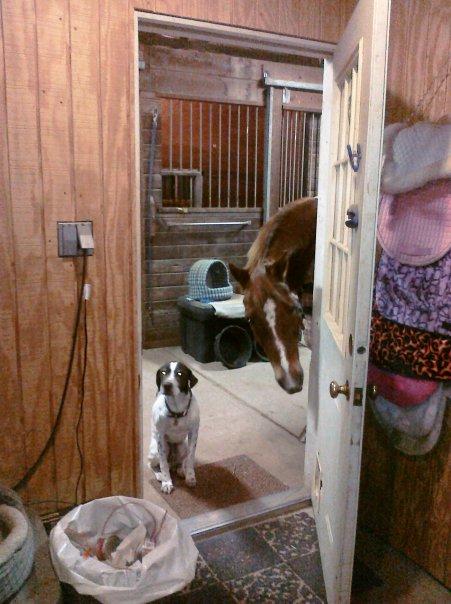 Bruno & Prince in the Tackroom