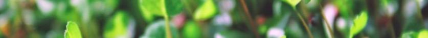 Screen Shot 2018-05-22 at 8.09.27 PM.jpg