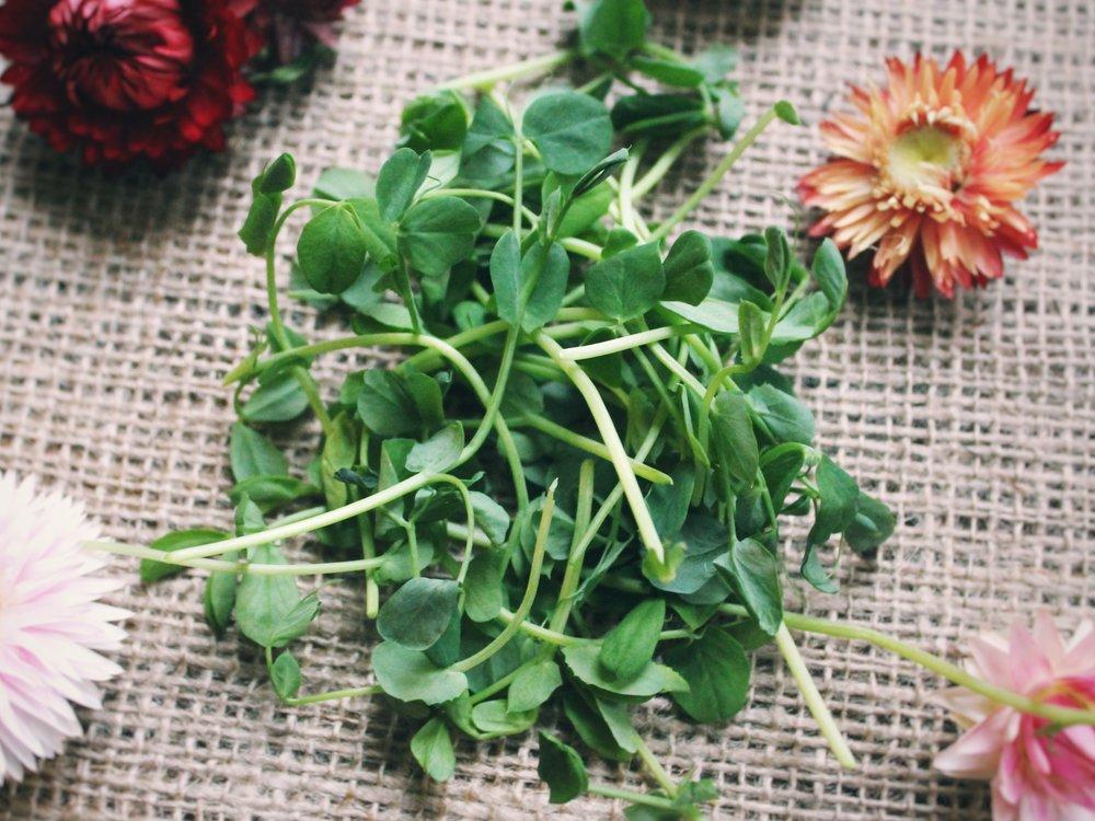 pea shoots - 4 oz or 1.75 oz options.