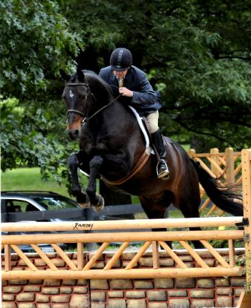 Bear_George_Upperville2013-367x450.jpg