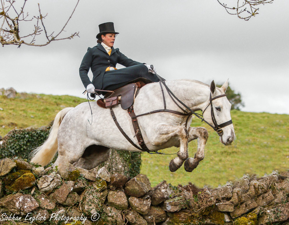 "Devon jumping a stone wall on the cob, ""Operator,"" with the Co. Galway Blazers"