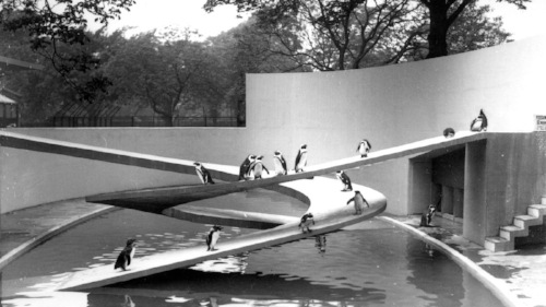 riba library photographs collection. penguin pool of london. 1934