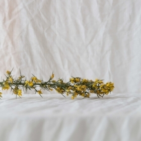 gorse on irish linens. photographed by  marina denisova