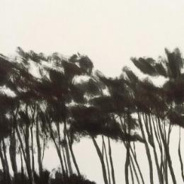 tree. étude. 2017 © frédéric forest