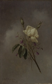 White Rose Against A Cloudy Sky. 1876