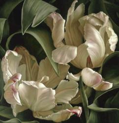 Libretto tulip ii. 2008