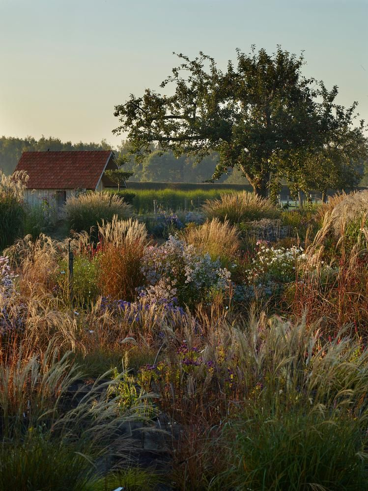 The break of dawn at 'Feather Garden' Le Jardine Plume, France  Photography by Allan Pollock-Morris