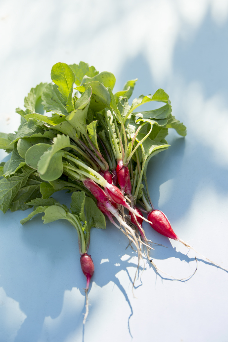 Radish Thinnings in Sunlight