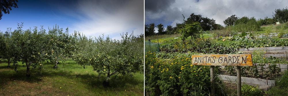 Eugene_Langan_Photography_Dublin-IrishSeedSavers-Orchard.jpg