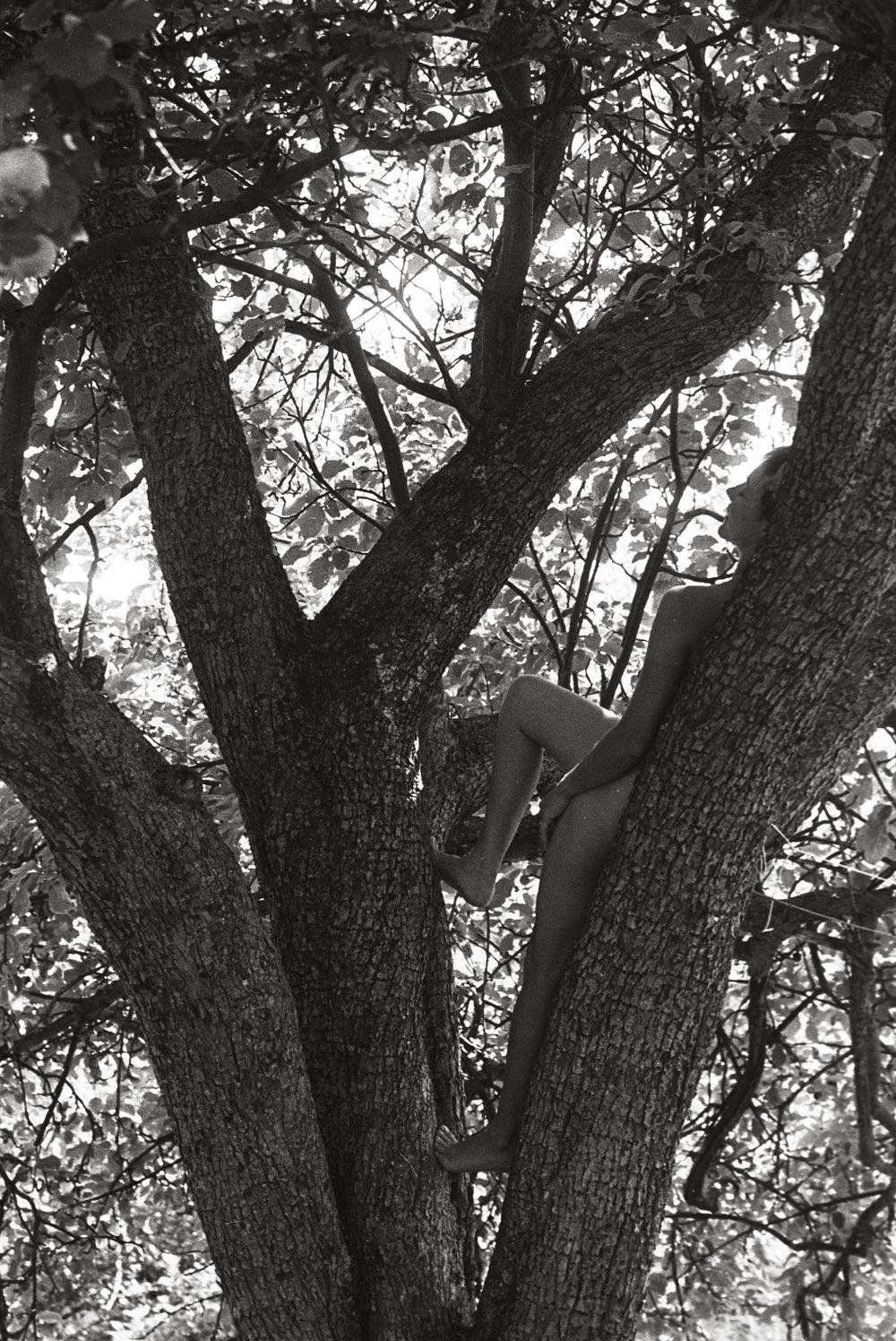 beth tree.jpg