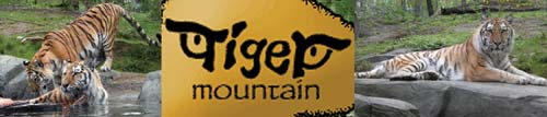 tiger-mountain-wide.jpg