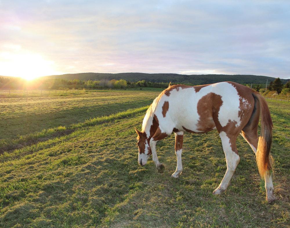 Windgate pasture.jpg