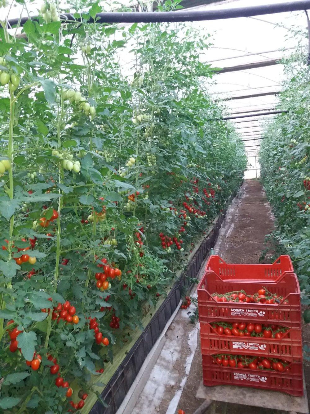 The greenhouse farm where Bakary David picks vegetables. Near Naples, Italy; August, 2018. © Pamela Kerpius