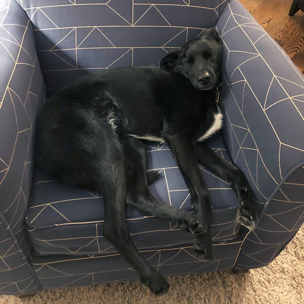 Luna - Chief Nap Officer