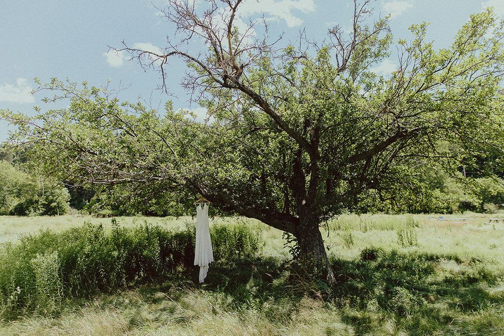 dress in tree.jpg