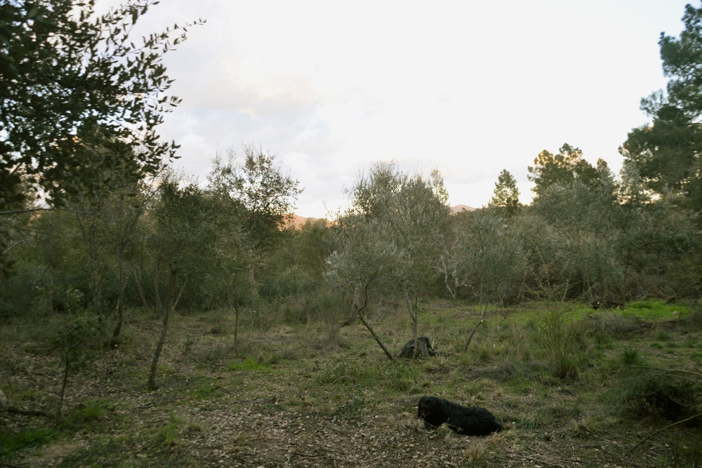 oliveiras2.jpg