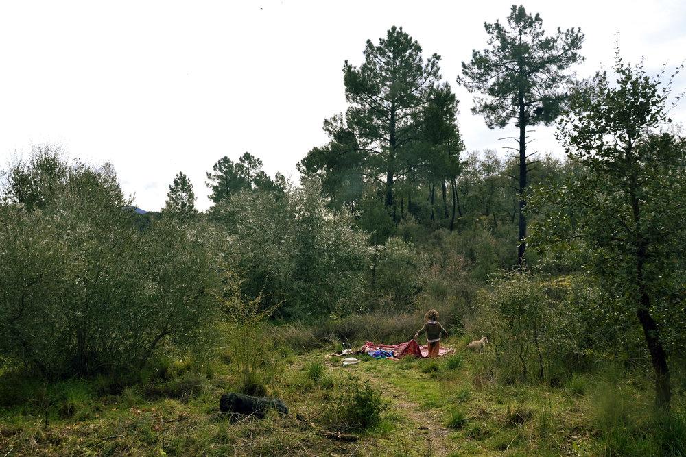 oliveiras1.jpg
