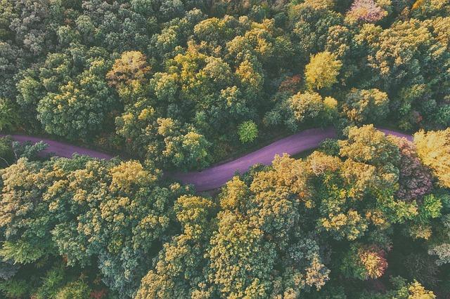 woods-768753_640.jpg
