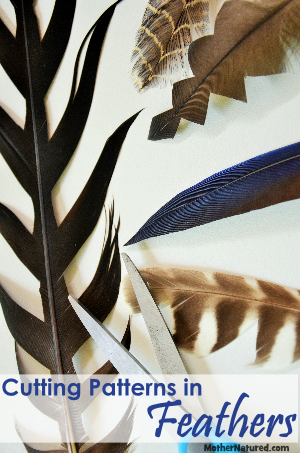 CUTTING PATTERNS IN FEATHERS