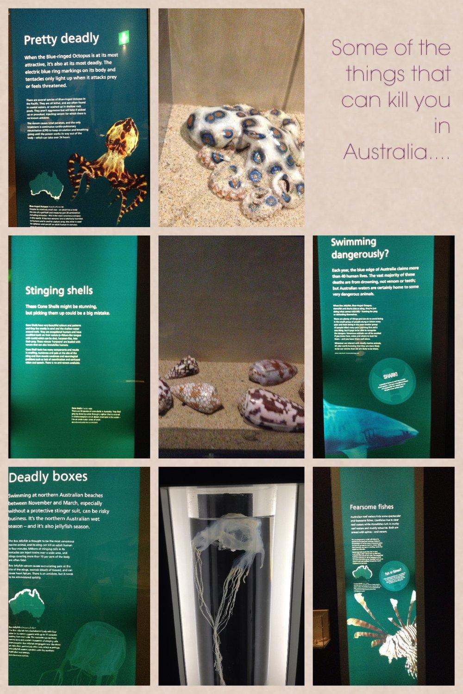 australianmuseum.jpg