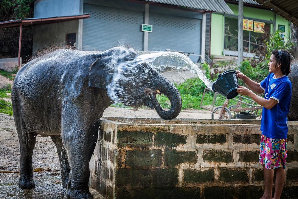 elephantridephuket-1.jpg