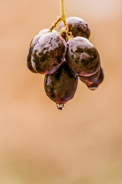 grapes-896069_640.jpg