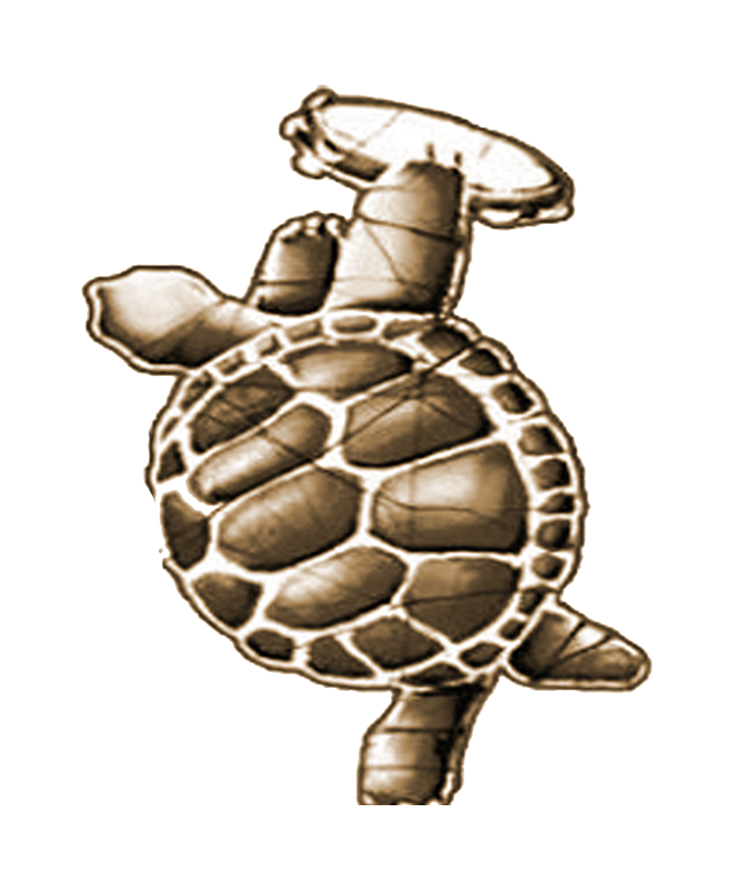 TURTLE 1.png