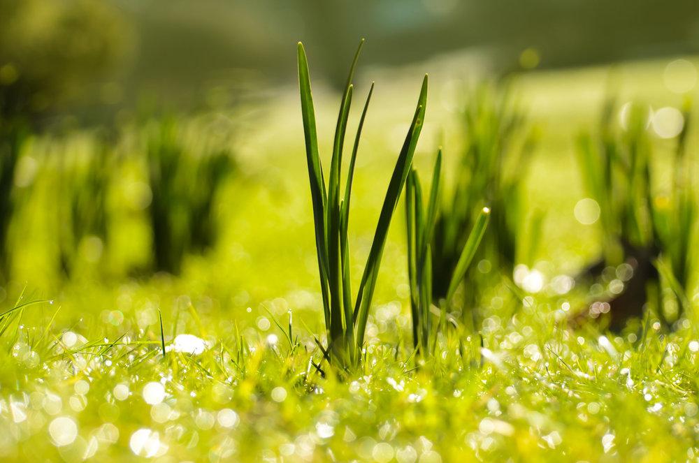 spring-1363860011cYo.jpg