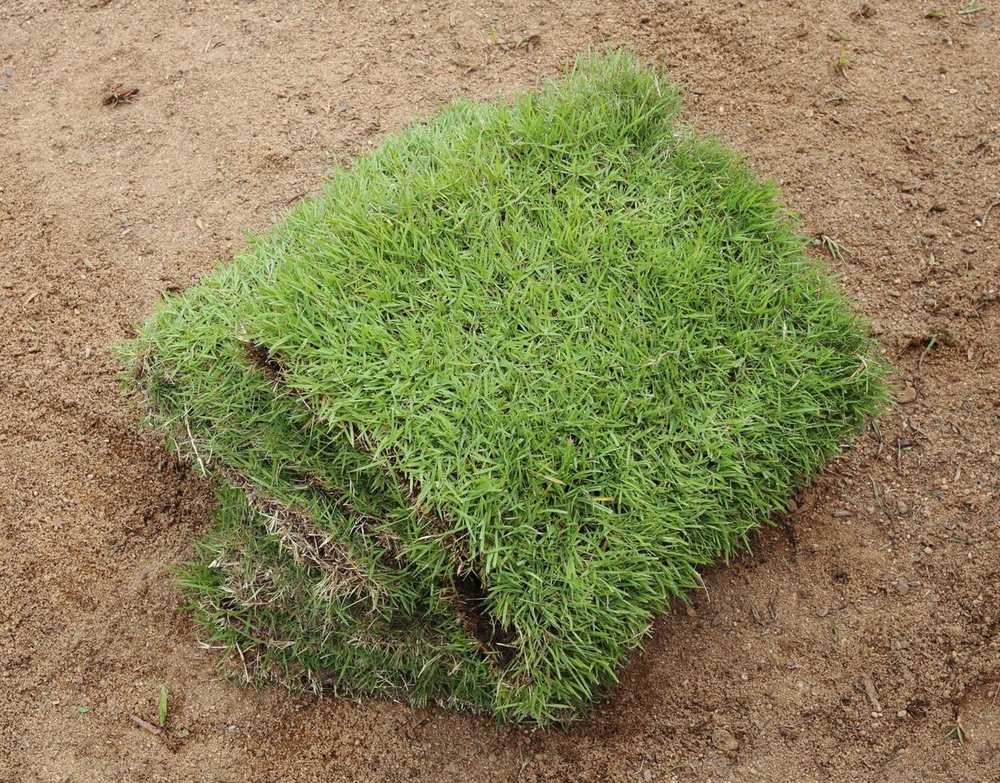 Dormant Sod… - Can be installed in the winter and doing so can even have some advantages!