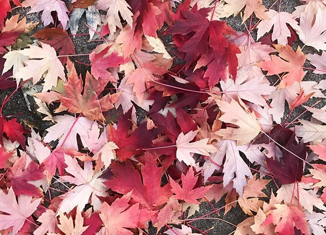 take your time. stop and—take pictures of pretty leaves 🍁