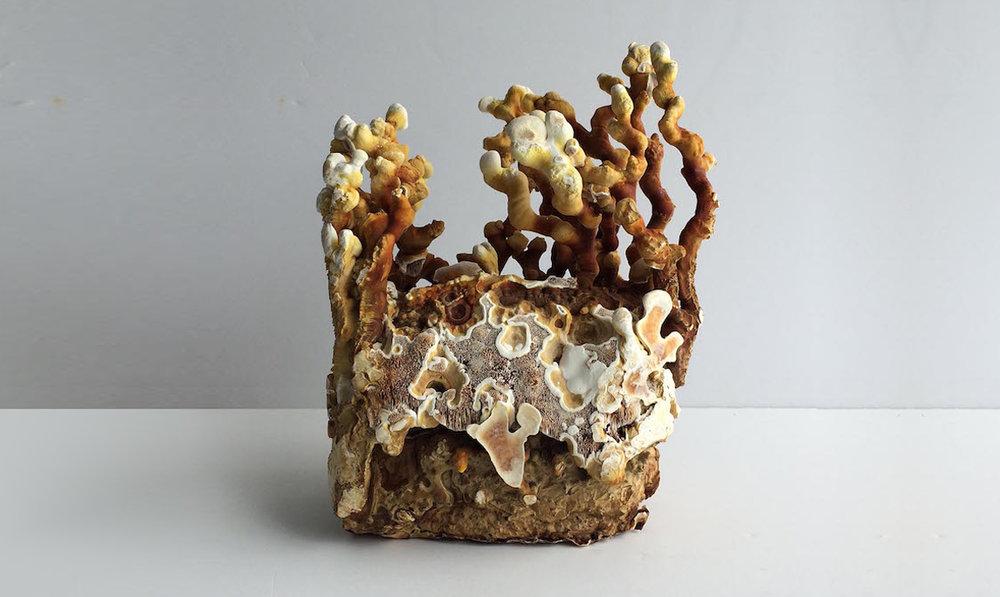 Phil Ross,  Wild Style .Fungal mycelium.