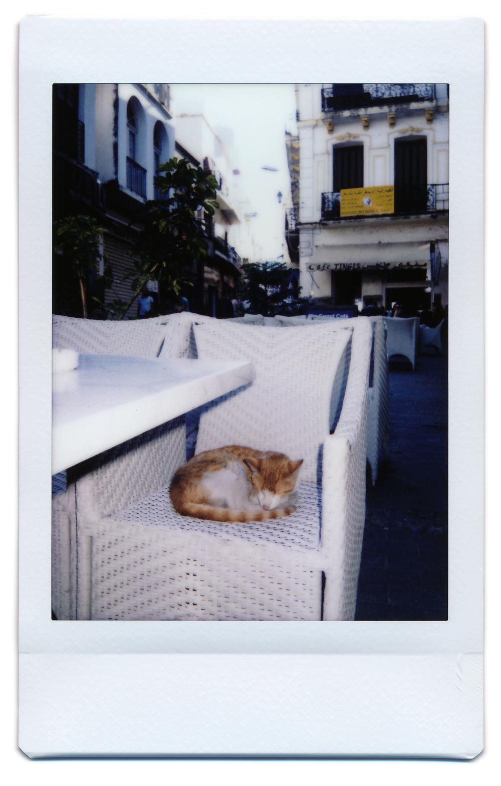 cat9.png