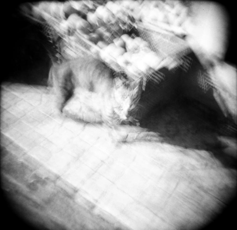 TangerCat_20170724_0018.png